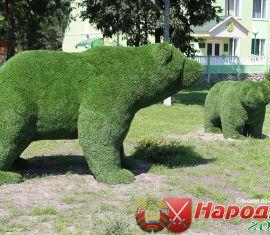 Медведи поселились в Ельском лесхозе